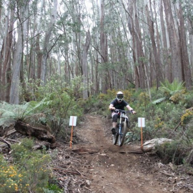 Picture of DH Mountain Bike (2 Day)