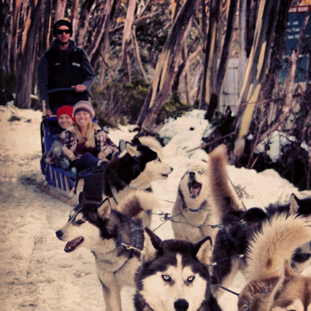 Picture of Spirit Of A Sled Dog Tour